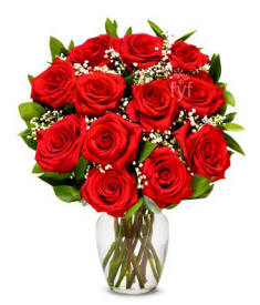 One Dozen Long Stemmed Roses $29.99 Valentines Day Delivery